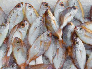 fish at market.