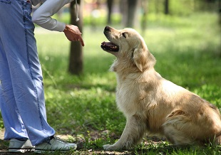 Dog Psychology and Training