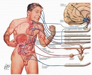 Human anatomy class online