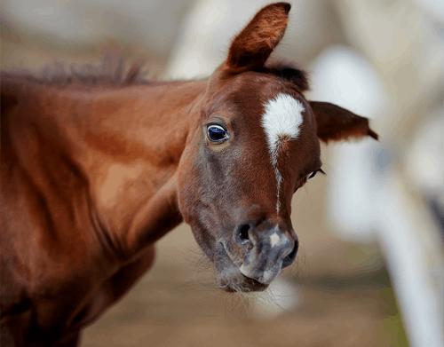 equine-behaviour