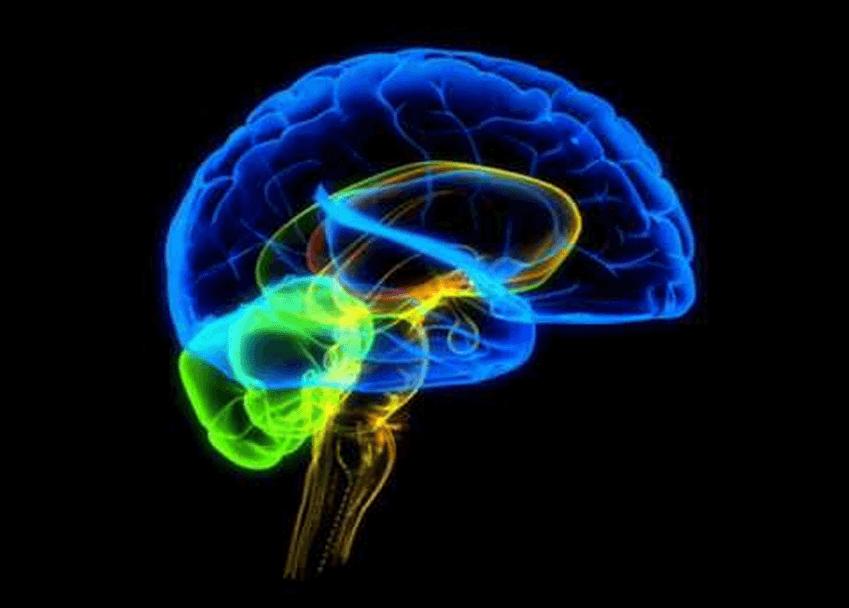 brain psychology