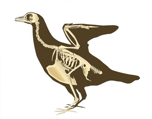 vertebrate-zoology
