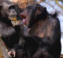 primatology-sm