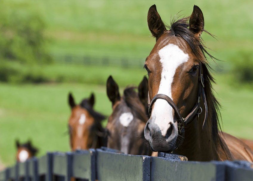 Horse Breeding Online Course Careerline Courses