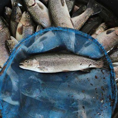 Australian Aquaculture.
