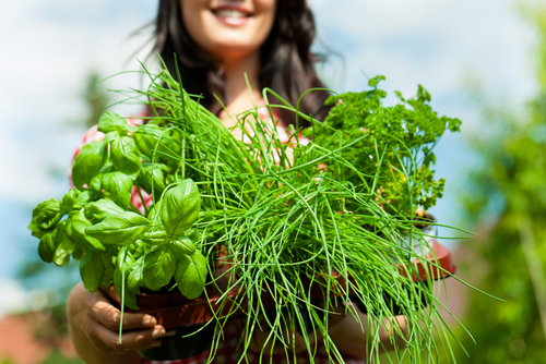 Learn to grow herbs online.