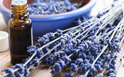 lavender course online