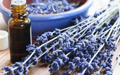 Lavender is used in aromatherapy.