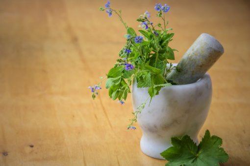Medicinal Herbs BHT227 Online Course