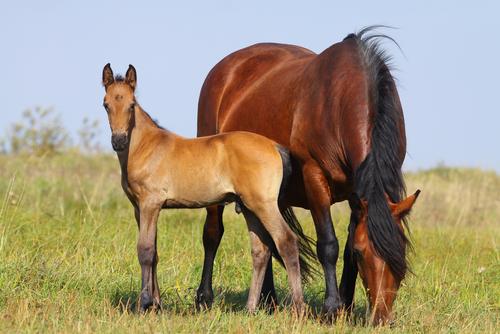 horse breeding course