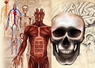 Advanced Certificate in Anatomy and Physiology Online Course
