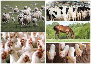 Merits of using EM products in animal husbandry