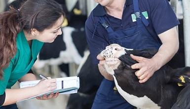 Animal Husbandry B (Animal Health) Online Course