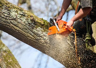Arboriculture A (Introduction) Online Course