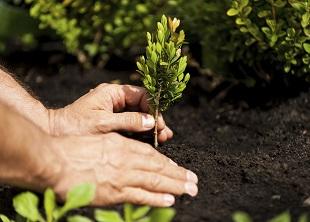 Arboriculture B Online Course