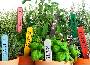 Culinary Herbs Online Course