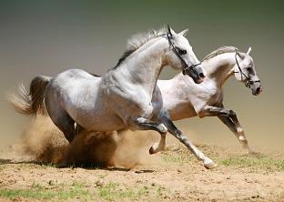 Equine Behaviour Online Course