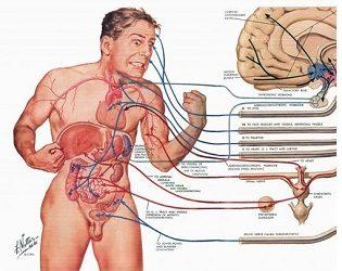 Human Anatomy B Online Course