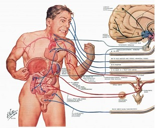 Human Anatomy B Online Course