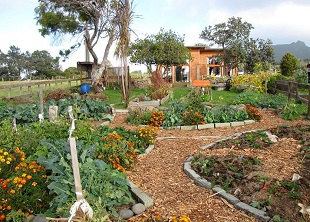Permaculture Systems Online Course