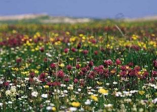 Plant Ecology Online Course