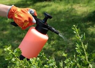 Plant Protection Online Course