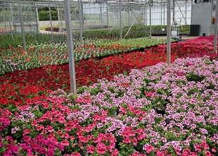 Wholesale Nursery Management Online Course