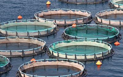 Mariculture (Marine Aquaculture) Online Course