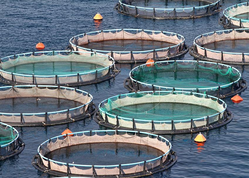 Mariculture Marine Aquaculture Online Course