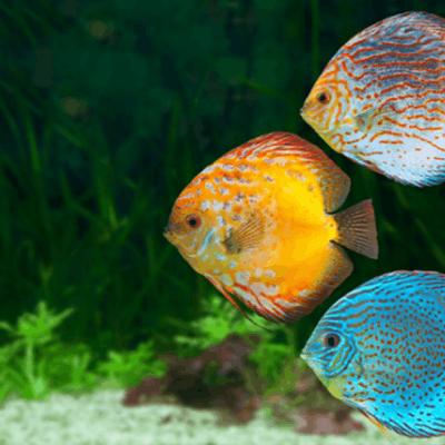 Online aquarium course