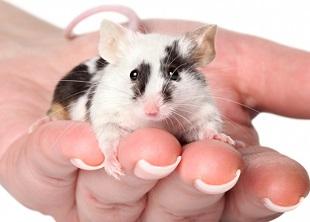 Pet Care Online Course