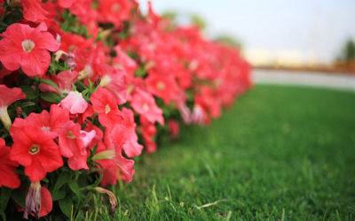 Growing Annuals Online Course