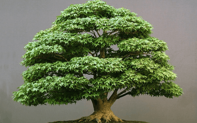 Bonsai Online Course