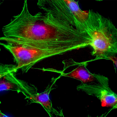Cell Biology Online Course