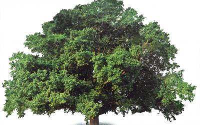 Deciduous Trees Online Course
