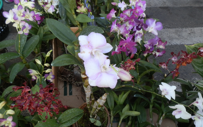 Growing Orchids Online Course