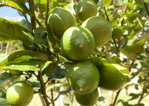 Home Fruit Growing Online Course
