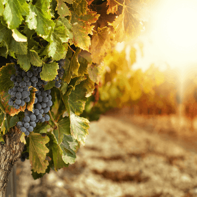 Viticulture Course Online