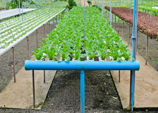 Hydroponics A (Introduction) Online Course