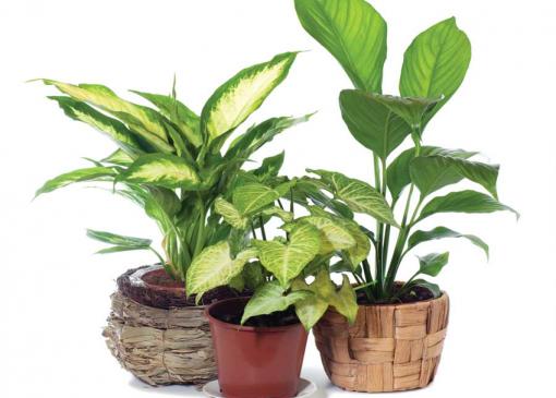 Interior Plants (Indoor Plants) Online Course