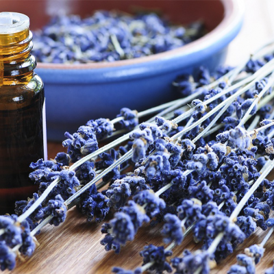 Growing Lavender Online Course