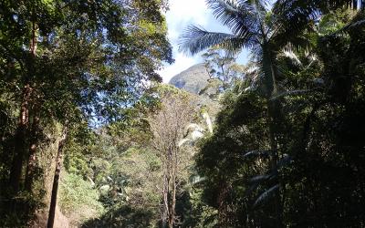 Bushcraft and Wilderness Skills Online Course