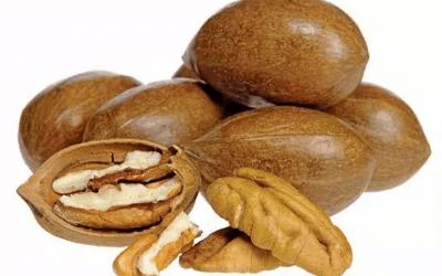 Nut Production (Warm Climates) Online Course