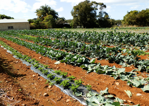 Commercial Organic Vegetable Growing Online Course