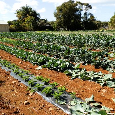 Commercial Vegetable Production Online Course