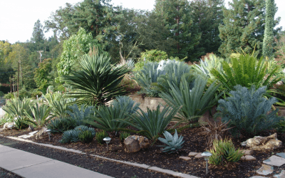 Palms & Cycads Online Course