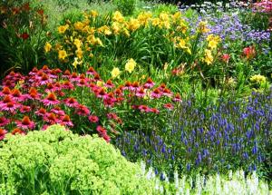 Perennials Online Course