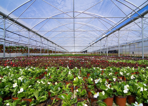 Horticulture B (Plant Knowledge) Online Course