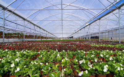 Plant Selection & Establishment Online Course