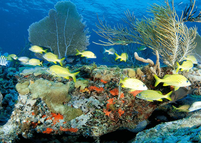 Online marine biology course.